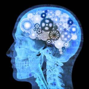 Human_Brain_Quality_Image_Square_295